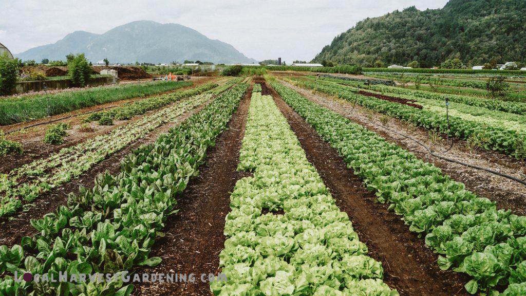Local Harvest Farm